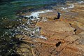 Cadillac Mountain Granite (Silurian-Devonian boundary times, ~419 Ma; Somes Sound Fjord, Mt. Desert Island, Maine, USA).jpg