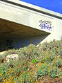 California poppies under a freeway underpass.jpg