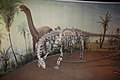 Camarasaurus mounts and mural - Royal Tyrrell Museum of Paleontology.jpg