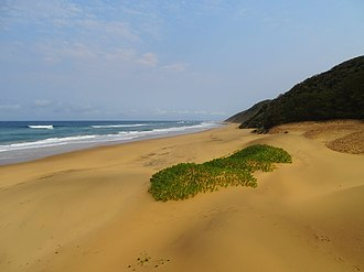ISimangaliso Wetland Park - Looking south along the beach from near the camping area at Cape Vidal.