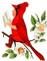 Cardinal Bird-Bird Children-0037-23.png
