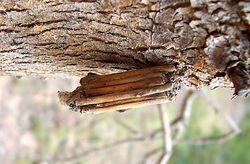 Case moth02.jpg