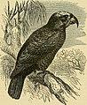 Cassell's book of birds (1875) (14770889593).jpg