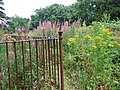 Cemetery wilderness - geograph.org.uk - 505450.jpg