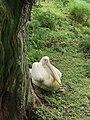 Central zoo, Jawalakhel5.jpg