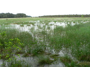 Varėna District Municipality - Čepkeliu marsh
