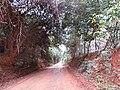 Chão vermelho - panoramio.jpg