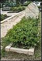 Chaplain Leonard's Grave St John's Church Canberra (26965179509).jpg
