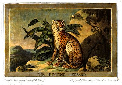 Charles Catton, Animals (1788) Page10 Image1.jpg