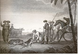 Hunting - Mughal aristocrats hunting a blackbuck alongside an Asiatic cheetah