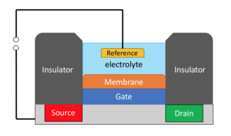 Chemical field-effect transistor - The schematic view of a ChemFET. Source, drain, and gate are the three electrodes used in a FET system. The electron flow takes place in a channel between the drain and source. The gate potential controls the current between the source and drain electrodes.