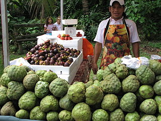 Cherimoya in Cali, Colombia