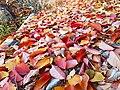 Cherry leaves 04.jpg