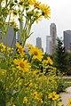 Chicago (958152308).jpg