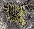Chlorargyrite, Cerussite, Galena-315654.jpg