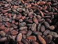 Chocolaterie-nestlé-broc-fèves-cacao-torrefiées.jpg