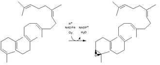 Squalene monooxygenase - Chemical reaction catalyzed by squalene epoxidase.