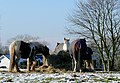 Christmas Dinner 2009, Colton Hills, Wolverhampton - geograph.org.uk - 1633672.jpg