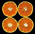 Citrus unshiu-unshu mikan.jpg