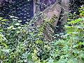 Cmentarz żydowski w Zabrzu30.jpg