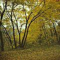 Cohan Park Chisinau (1990). (13898236402).jpg