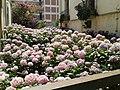 Colors de Portbou - panoramio.jpg