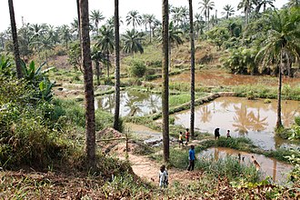 Fish farming - These fish-farming ponds were created as a cooperative project in a rural village in the Congo.