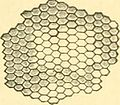 Compendium of histology (1876) (20661894902).jpg