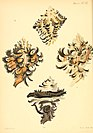 Conchologia iconica, or, Illustrations of the shells of molluscous animals (1845) (20668564692).jpg