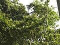 Costa Rica (6110129372).jpg