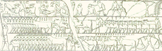 Ancient Egyptian mathematics - This scene depicts a cattle count (copied by the Egyptologist Lepsius). In the middle register we see 835 horned cattle on the left, right behind them are some 220 animals (cows?) and on the right 2235 goats. In the bottom register we see 760 donkeys on the left and 974 goats on the right.