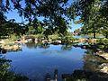 Coy Pond in Osaka Garden.JPG
