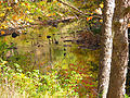 Crane-creek-fall - West Virginia - ForestWander.jpg