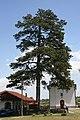 Crkva Uspenja Bogorodice, Petnica 013.jpg