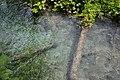 Crystal blue water in Plitvice Lakes National Park, Croatia (48670291726).jpg