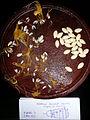 """Cucurbita pepo """"zapallo de Angola"""" semillería La Paulita - fruto cortado (AM13) - sector 5 foto 2.JPG"""