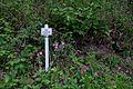 DEU-BaWü LSG-4.35.029 1 Im-Hasenbühl-05 Naturlehrpfad.jpg