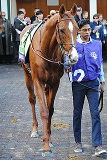 Waldgeist British-bred Thoroughbred racehorse