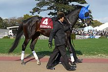 Danon-Chantilly20110213.jpg