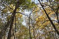 Darby Creek-Oaks and Sugar Maples find Light in the Fall 1.jpg