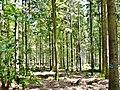 Der Wald in der Nähe vom Sommerberg in Bad Wildbad - panoramio.jpg