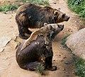 Deux ours Regourdou.jpg