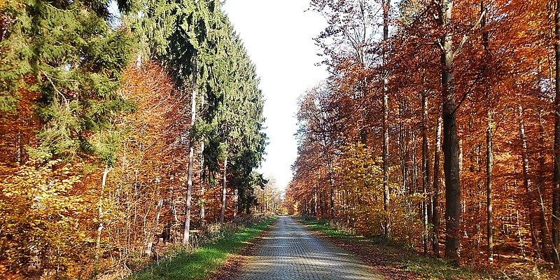 File:Die alte Panzerstraße (Römerstraße) von Böblingen nach Stuttgart - panoramio.jpg