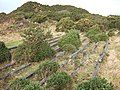 Disused mica drags on Dartmoor - geograph.org.uk - 313031.jpg