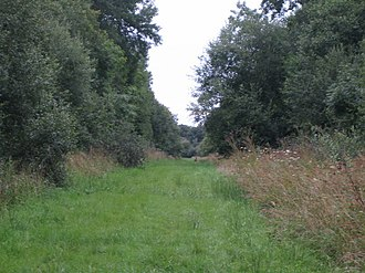 Grendon and Doddershall Woods - Path in Doddershall Wood