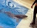 Dolphins (7980891850).jpg