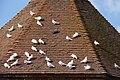 Doves on dovecot roof, Felbrigg Hall - geograph.org.uk - 1500798.jpg