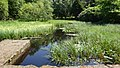 Drowning Pond, Mugdock Country Park, Milngavie.jpg