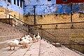 Ducks, stairs (2566367621).jpg