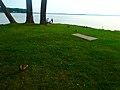 Ducks at Warner Beach - panoramio (1).jpg